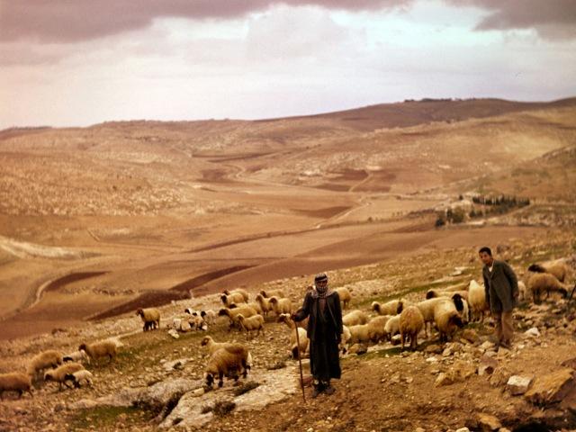 Palestinians-shepherds-Bethlehem